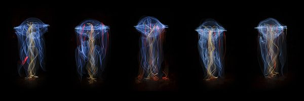 medusas-light-painting-hilo_6